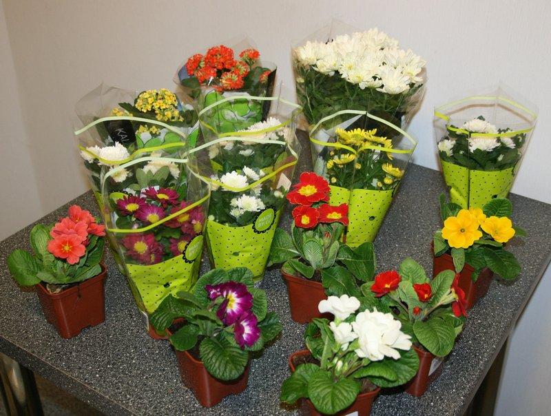 Подарок цветы горшок с фото 956